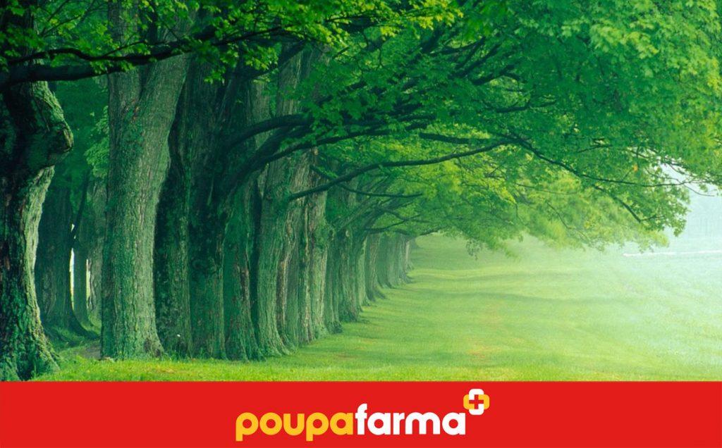 Árvores e a sua Saúde